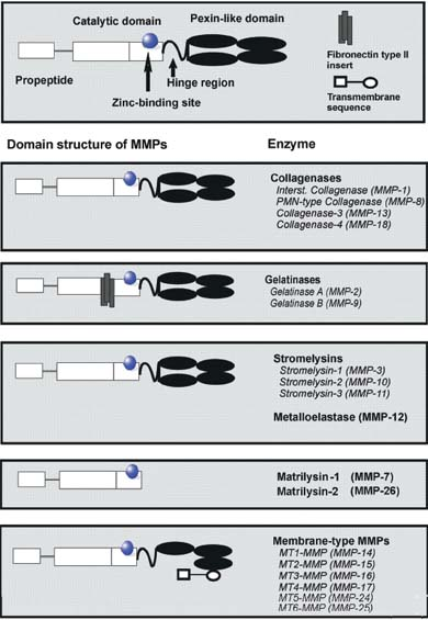 The Role Of Matrix Metalloproteinases MMPs And Their Inhibitors In
